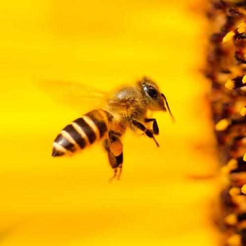 Reiki Bees